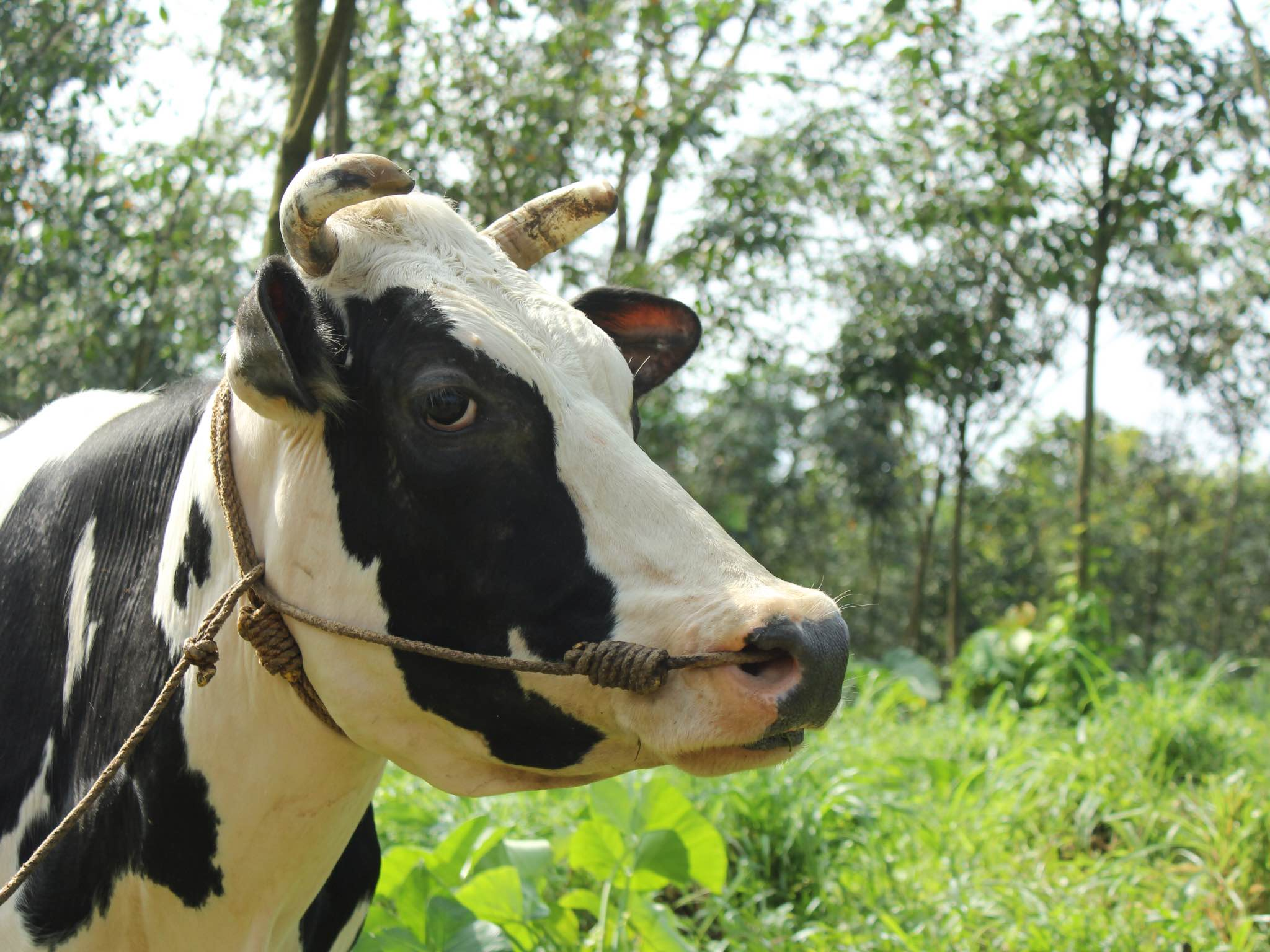 best_icecream_kerala_milk_farm_1.jpg
